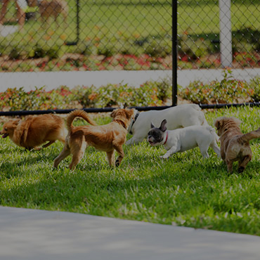 Large Dog Park at Country Springs Apartments